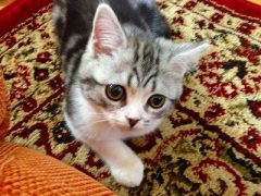 蒲田 レンタルスタジオ 京浜東北線 貸しスタジオ 猫 ヨガ レッスン インストラクター
